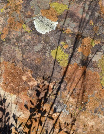 colour texture shadows