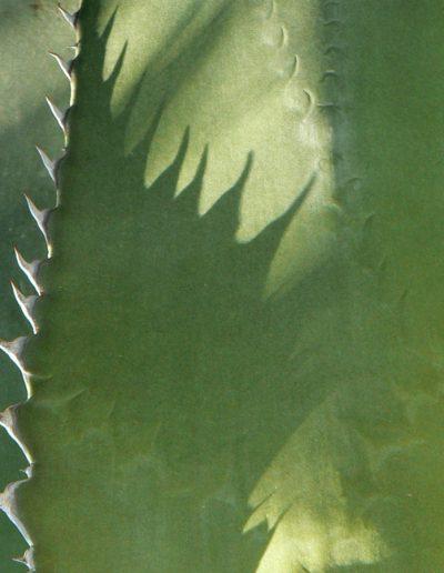 thorns shadows textures