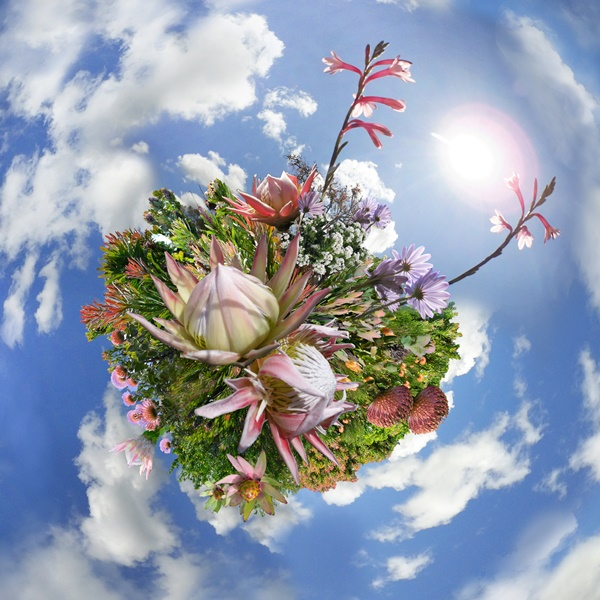 Fynbos Tiny Planet