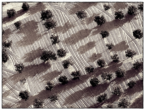 Olive Grove Patterns