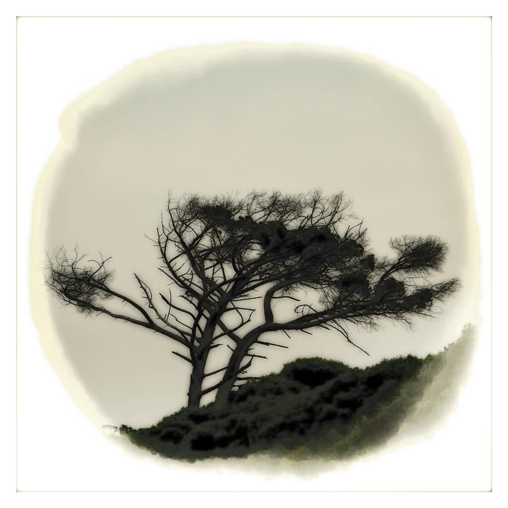 tree in moody monotone