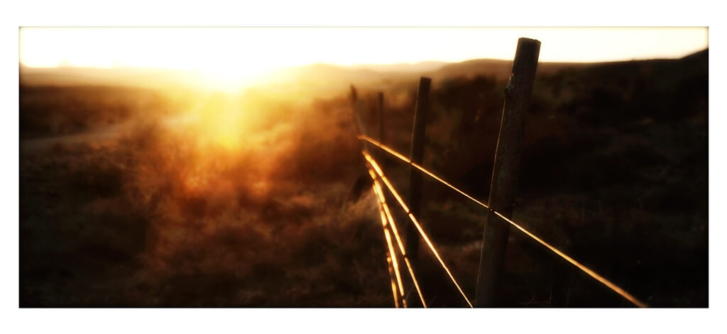 fence shining at sunset, Karoo bush