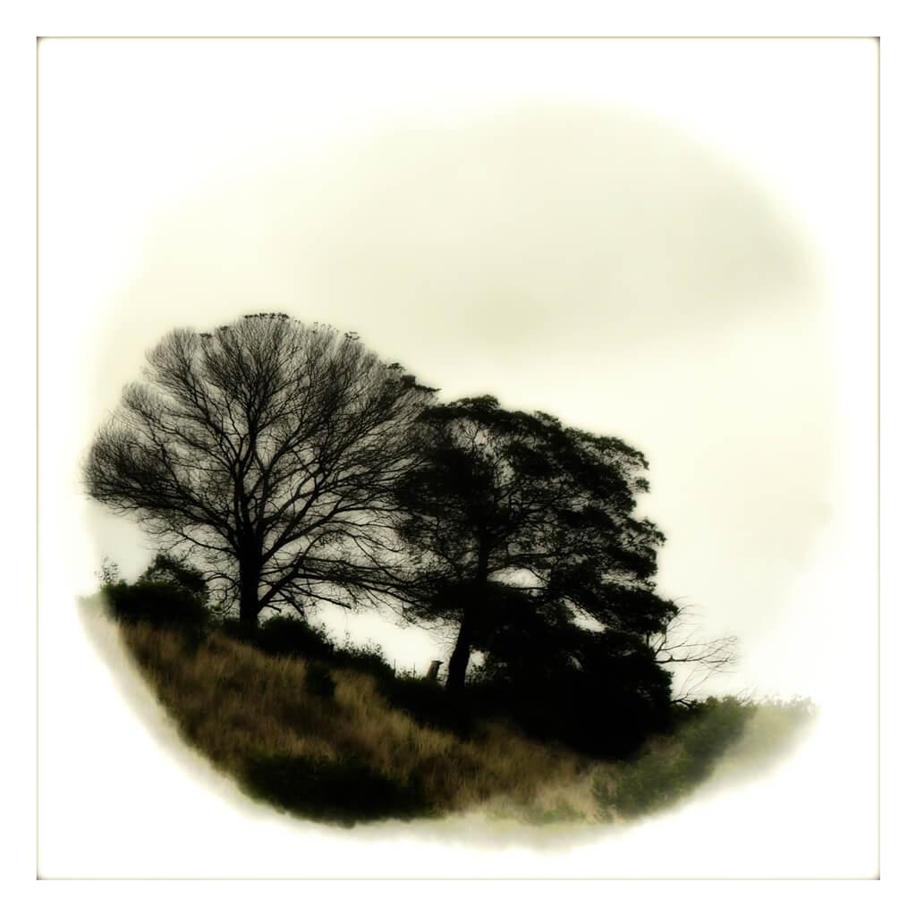 Trees in moody monotone
